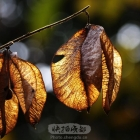 冬日枯叶的透视