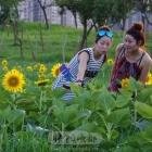 我们与向阳花约会