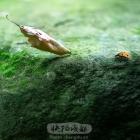 落叶与瓢虫