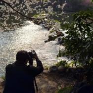 樱花树下摄影...