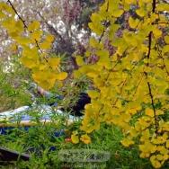 游乐园之秋