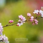 笑起来真好看,像春天的花衣裳