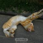 猫咪伸懒腰