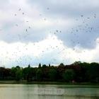 天空群鹭飞翔