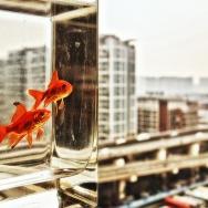 鱼眼看世界