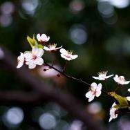春天的序曲