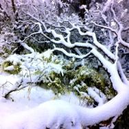 观雪景 添凉...