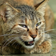 猫要发飙了